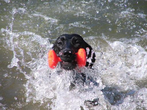 """FATY - plavecký styl """"kraul"""" :-)"""